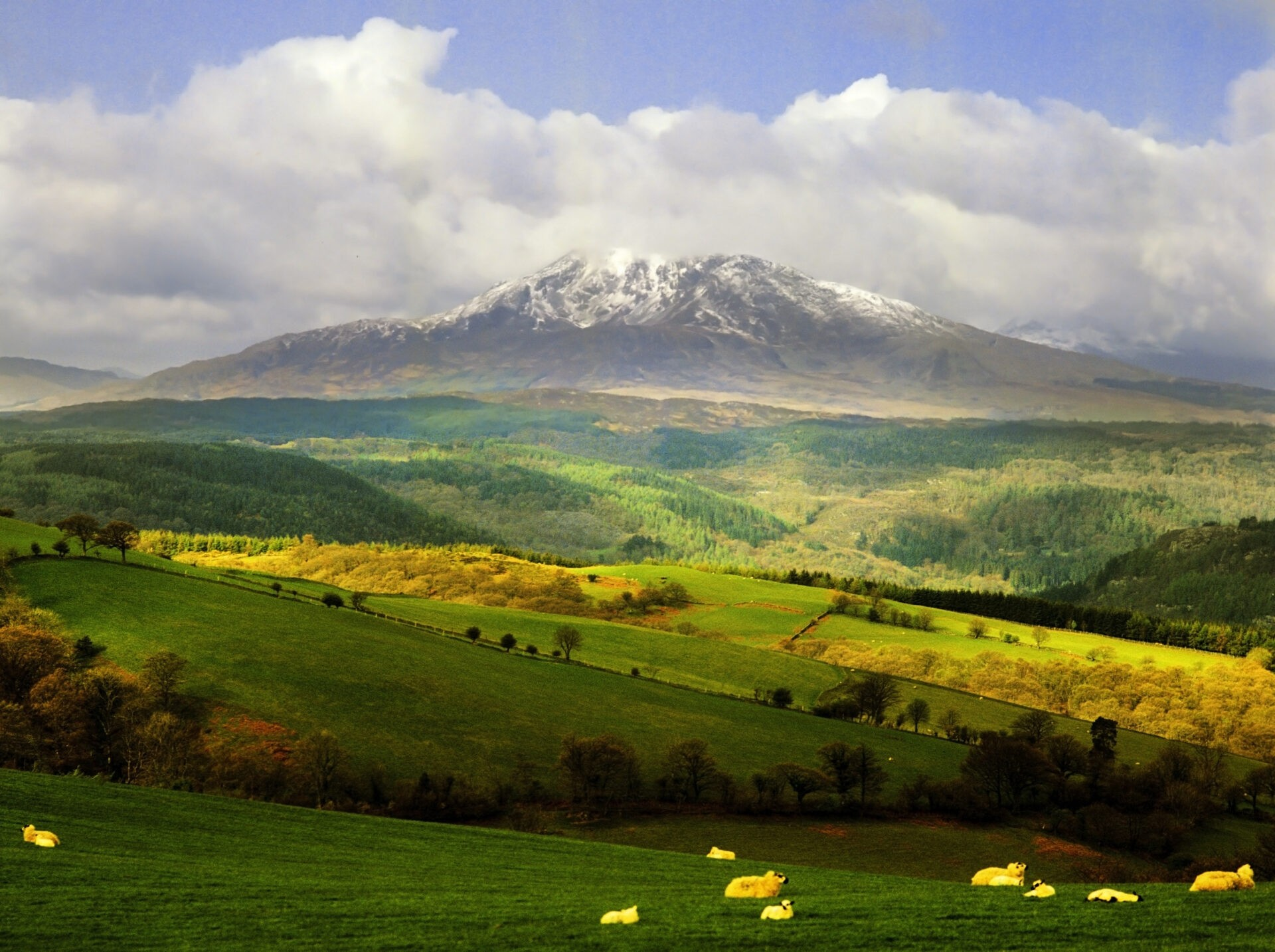 fields with sheep and the snow covered peak of snowdon behind. In the Snowdonia national park, gwynedd, north Wales, uk, gb